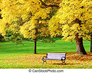 panca, e, acero, in, parco città, in, autunno
