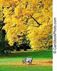 panca, e, quercia, in, parco città, in, autunno