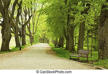 panca, in, il, primavera, parco