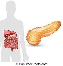 Pancreas anatomy and human silhouette with internal organs, gallbladder, intestine, stomach and spleen on a white background