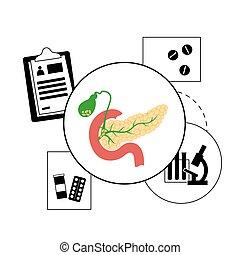 Pancreas logo concept - Pancreas, duodenum and gallbladder ...