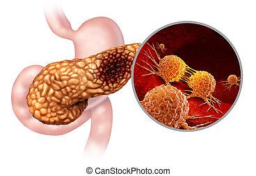 pancreatico, cancro, anatomia