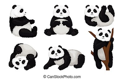 Panda Animal in Different Poses Vector Set. Bear Climbing the Tree and Turning Upside-down on the Ground