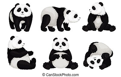 Panda Animal in Different Poses Vector Set. Bear Sitting and Turning Upside-down on the Ground