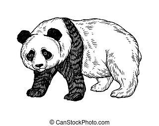 Panda bear engraving vector illustration