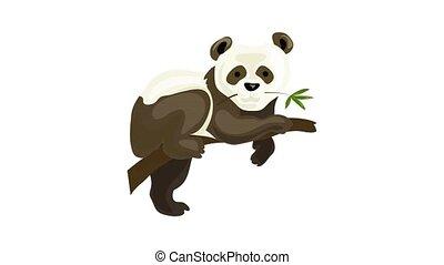 Panda bear icon animation best on white background for any design