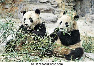 panda, björnar, in, beijing, porslin