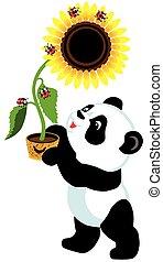 panda, cartone animato, girasole, presa a terra