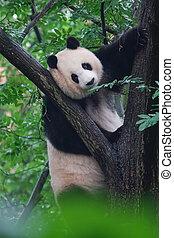 Panda cute climbing a tree