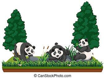 Panda in nature landscape
