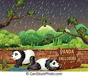 Panda in Zoo in Raining Night