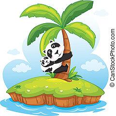panda, isola