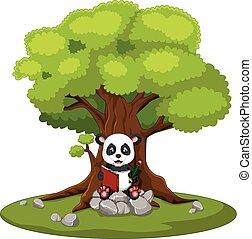 panda, pietra, libro, lettura, seduta