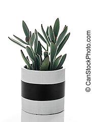 panda, roślina, w, niejaki, czarnoskóry i biały, ceramiczny garnczek