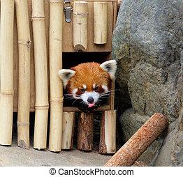 panda, rouges