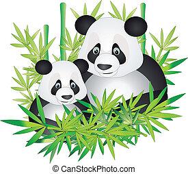 panda, vektor