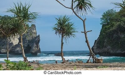Pandanus tectorius tropical palm on the beach in front of...