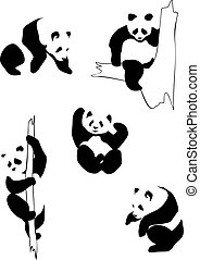 Pandas in different positions
