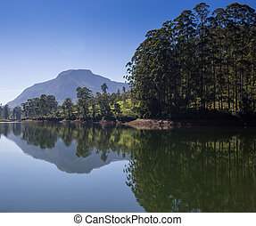 pang ung , reflection of pine tree in a lake
