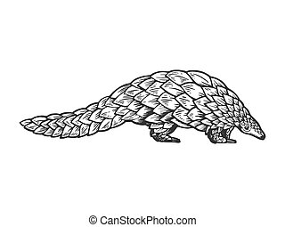 pangolin, gravure, vecteur, animal, illustration