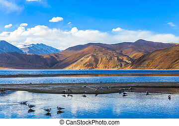 pangong, see, in, der, morgen