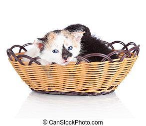 panier, blanc, isolé, chaton