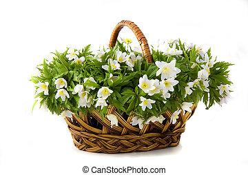 panier, fleurs blanches