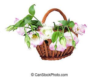 panier, fleurs, eustoma