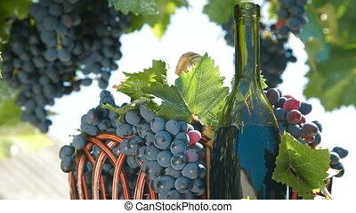 panier, frais, bouteille, raisins, vin