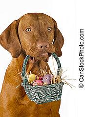 panier, paques, chien, tenue