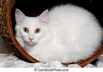 panier, reposer, chat blanc