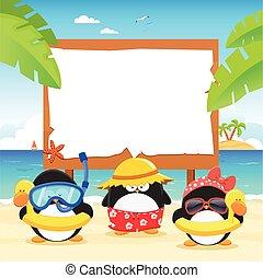panneau affichage, été, pingouins