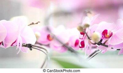 panning, bloem, orchidee