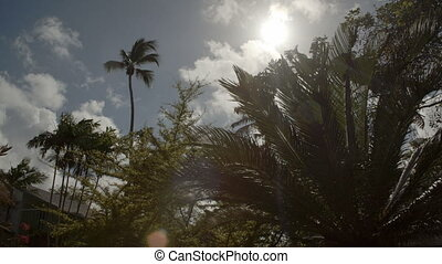 Panning of tropical trees - Slow panning of tropical plants ...