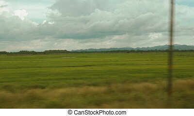 Panning shot of a rice field in Costa Rica - A large rice...