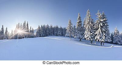 panoráma, közül, a, tél, reggel, a hegyekben