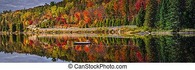 panorâmico, floresta, estrada, outono