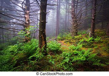 panorâmico, floresta, hiking, appalachian, rastro, carolina norte, natureza, lan