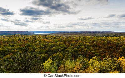 panorâmico, floresta, paisagem, em, um, outono