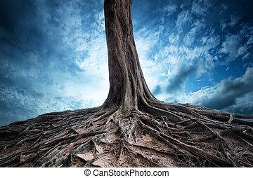 panorâmico, fundo, de, árvore velha, e, raizes, em, night., lua, luz, magia, e, mistério, paisagem