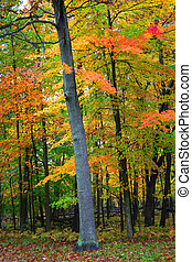 panorâmico, outono
