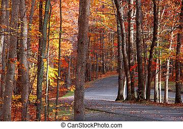 panorâmico, outono, estrada