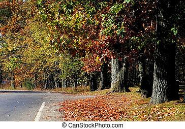 panorâmico, outono, passagem