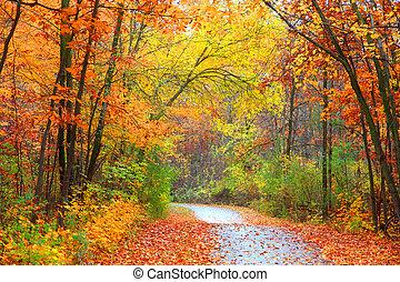 panorâmico, outono, rastro