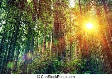 panorâmico, pôr do sol, floresta