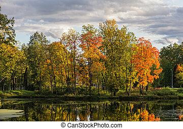 panorâmico, paisagem outono, ligado, a, lagoa