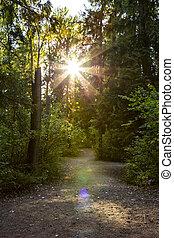 panorâmico, rastro, através, a, floresta