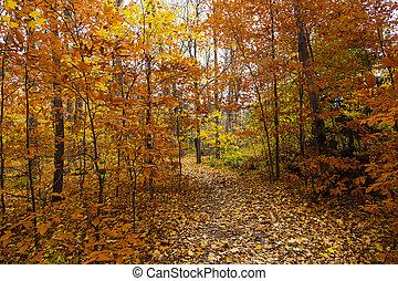 panorâmico, rastro, em, outono