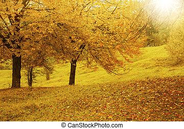panorâmico, vibrante, outono, campo, paisagem, em, a, morno, outono, luz sol