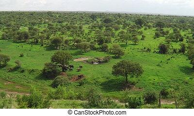 panorama, éléphants africains